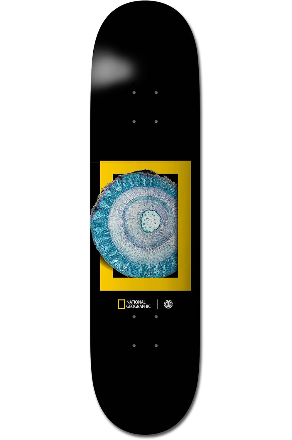 "Element Skate Board 8.25"" MOLECU NATIONAL GEOGRAPHIC Assorted"