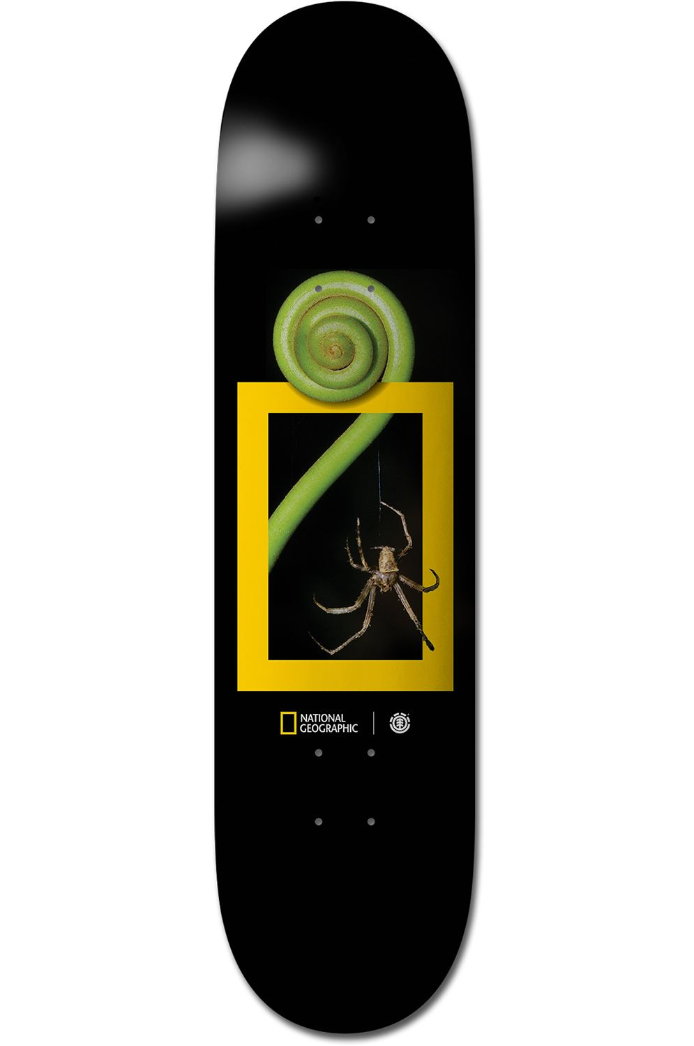 "Element Skate Board 8"" SPIDER NATIONAL GEOGRAPHIC Assorted"